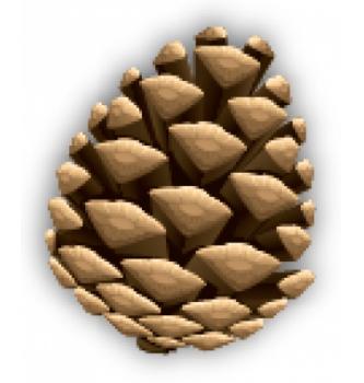 10 cones for 10 euro